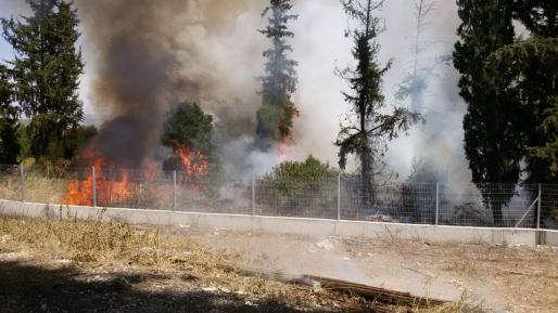 צוותי כיבוי הוזעקו לשריפת חורש ביער רמות בירושלים