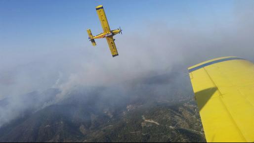מטוסי כיבוי וכוחות נוספים הוזנקו לשריפת פסולת באזור יער אורנים שברכס הכרמל