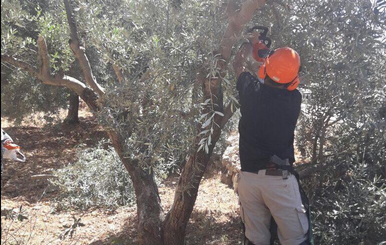 המנהל גזם עצים ששימשו מסתור לזורקי האבנים בכביש עוקף חוסאן
