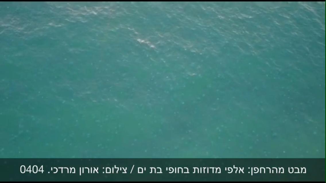 צפו בתיעוד מהרחפן: עשרות אלפי מדוזות בחופי בת ים