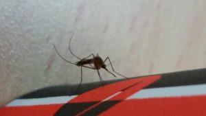 קדחת מערב הנילוס מתפשטת: המשרד להגנת הסביבה קורא לרשויות להגביר פעולות להפחתת מפגעי יתושים