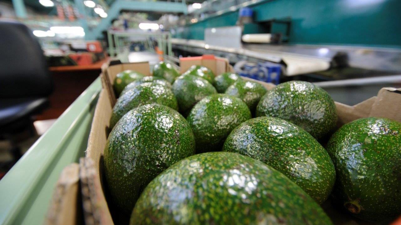 התארגנות חקלאית תפיץ לרשתות פירות וירקות באמצעות מערכת הפצה עצמאית
