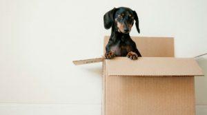 כמה עולה מעבר דירה והאם ניתן להוזיל אותו?