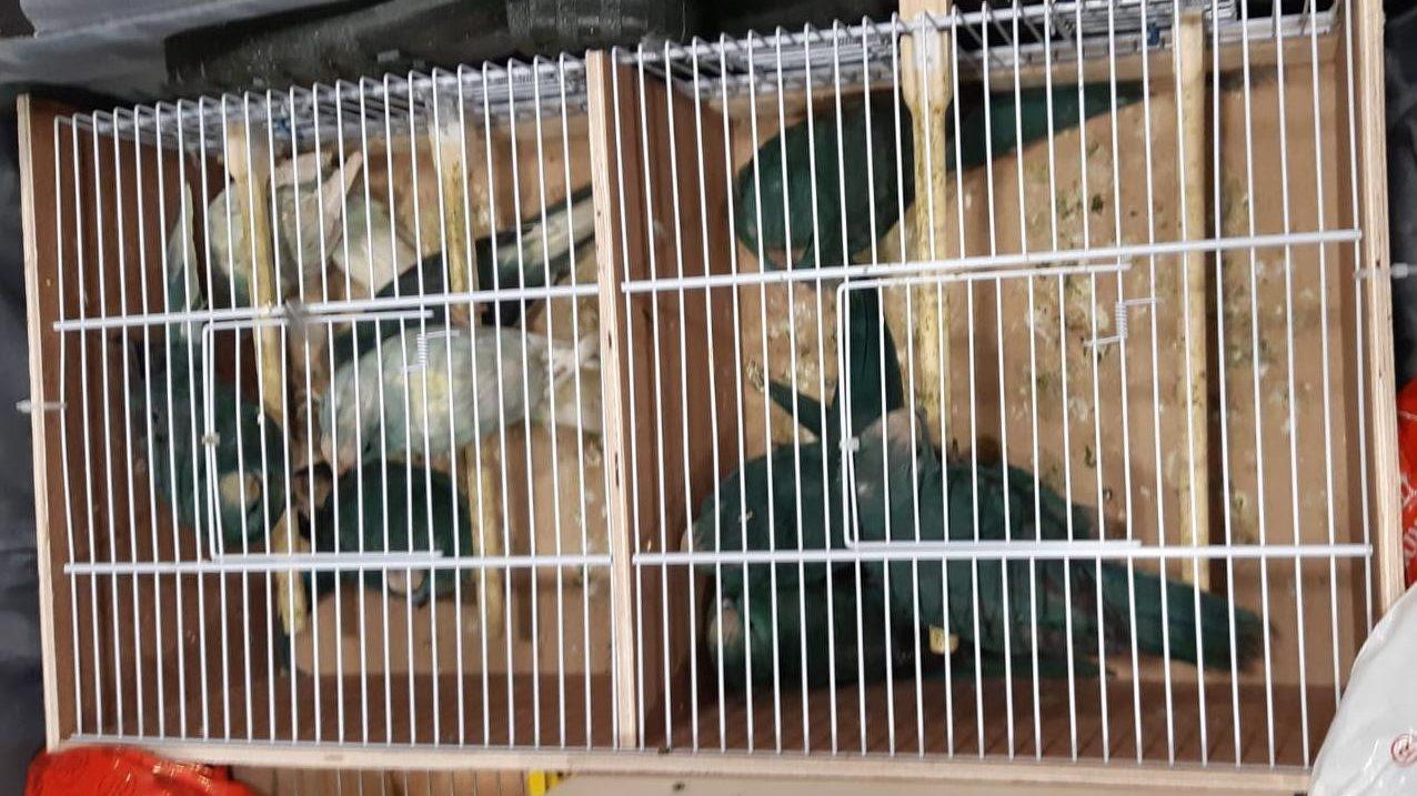תיעוד: מזוודה שעשתה דרכה מבלגיה לישראל שימשה להברחת ציפורים מוגנות