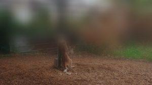 מזעזע: לפני שגנבו טלאים, הרעילו 5 כלבים ותלו כלבה שחנקו באמצעות שרשרת מתכת (צפו במעצר)
