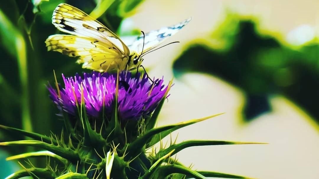 בוקר נפלא בארצנו: יצירות הטבע