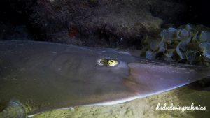 """תמונות מהממות מצלילה סמוך לחוף גורדון בת""""א: צב ים, טריגון, גיטרן וארנבון ים"""