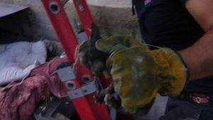 בעומק שישה מטרים מתחת לאדמה: לוחם אש חילץ גור חתולים לכוד