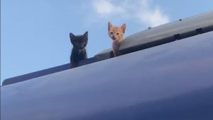 נסעו שתי תחנות לאחר שלא הצליחו לרדת: שני גורי חתולים חולצו מגג הרכבת | צפו