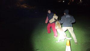 ריבוי פיגועי האבנים והתבערה: יחידת הכלבנים בגוש עציון מגבירה את האימונים