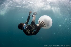 צפו בצילומים מהים ומהאוויר: מדוזות בחופי מפרץ חיפה