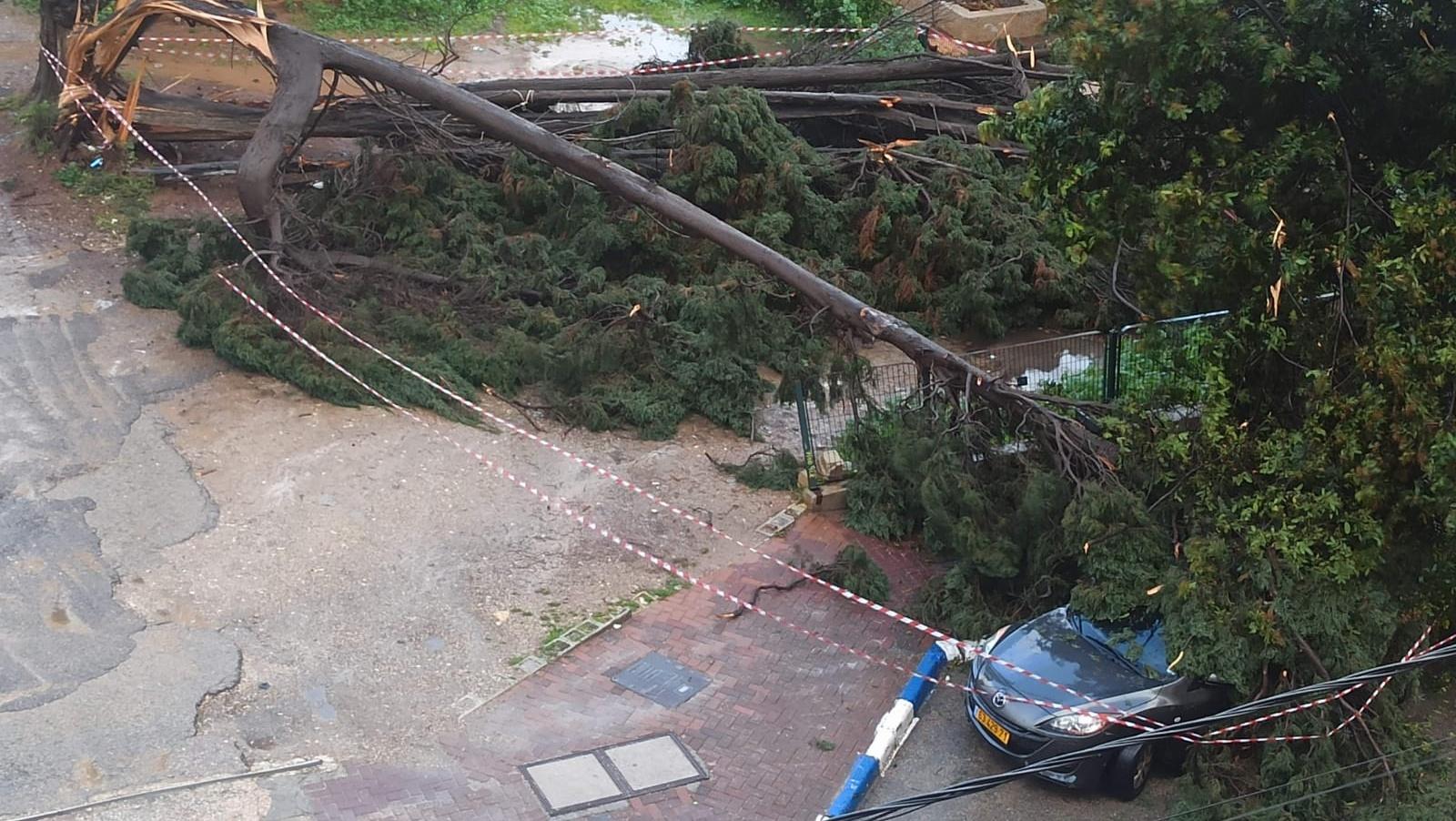בשל מזג האוויר הסוער: נזק לכלי רכב בקריסת עץ ברעננה